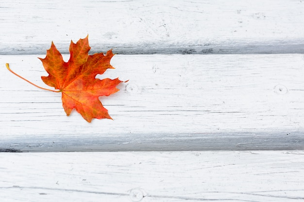 Fall maple leaf on white wooden