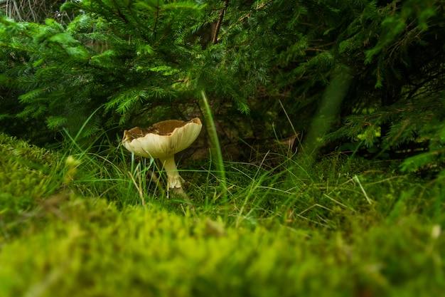 Осенний гриб в лесу на траве