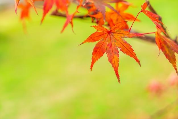 Cadono le foglie naturali parco luce