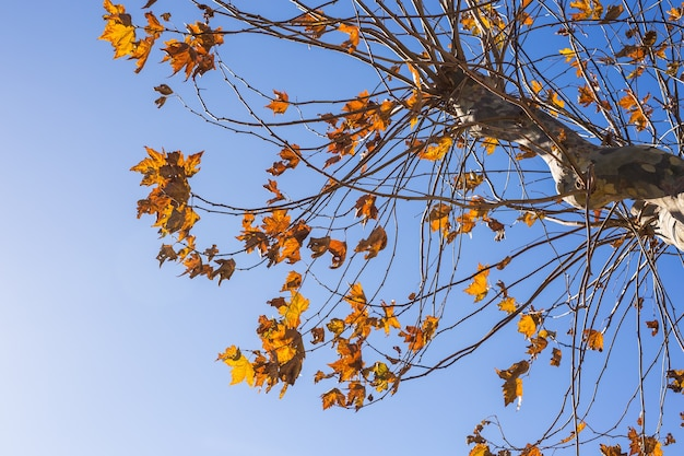 Fall nature autumn tree leaves sky background