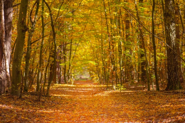 秋の風光明媚な道