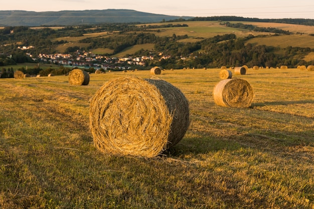 Fall season landscape with rolls of hays