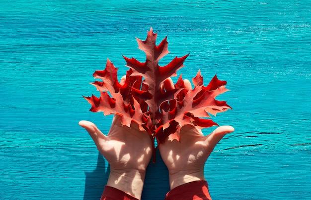 Осенняя сезонная квартира лежала с красными дубовыми листьями в женских руках на потрескавшейся фактурной бирюзовой древесине.