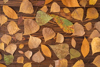 Fall set with variety of fallen leaves