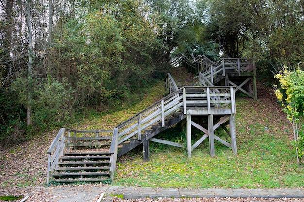 숲과 나무 계단에서 하강 시간