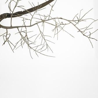 白い表面に秋の木の枝