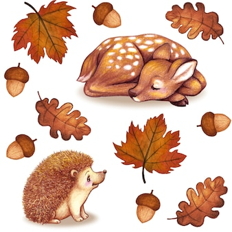 Fall watercolor leaves fawn hedgehog acorn collection isolated