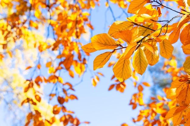 Осенние желтые листья на фоне солнечного неба