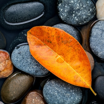 Fall and zen like concepts orange leave fall on river stone .