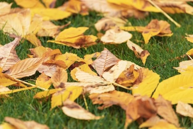 公園の緑の芝生に落ちた紅葉。秋の自然の背景。