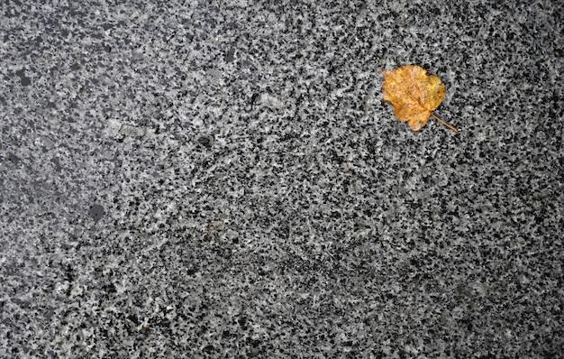 Упавший осенний лист на землю после дождя
