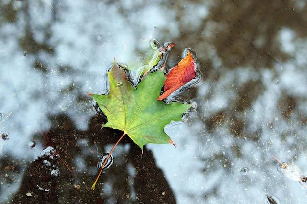Опавшие осенние листья в луже, плохая погода, вид сверху концепция хэллоуина