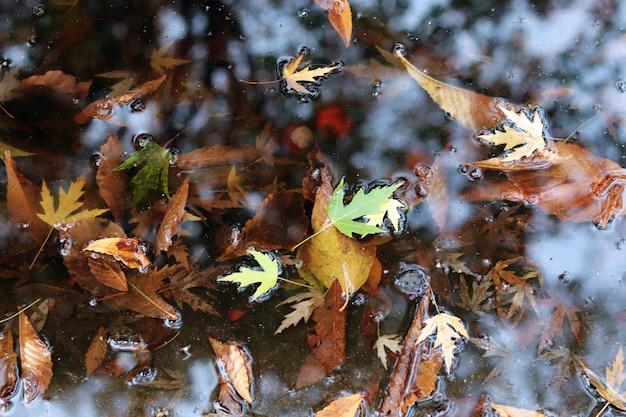 웅덩이 나쁜 날씨 상위 뷰 할로윈 개념에 떨어진 단풍