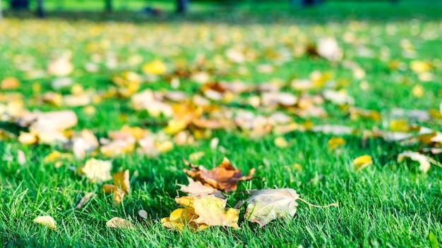 赤の広場、モスクワの芝生に落ちた紅葉。