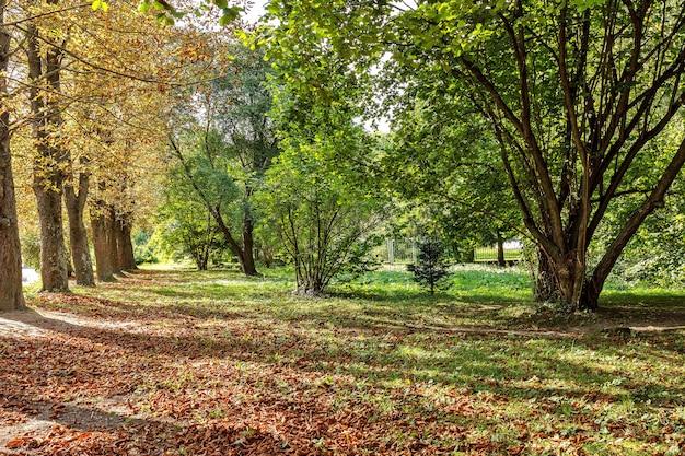 Опавшие осенние листья на траве в солнечном утреннем свете