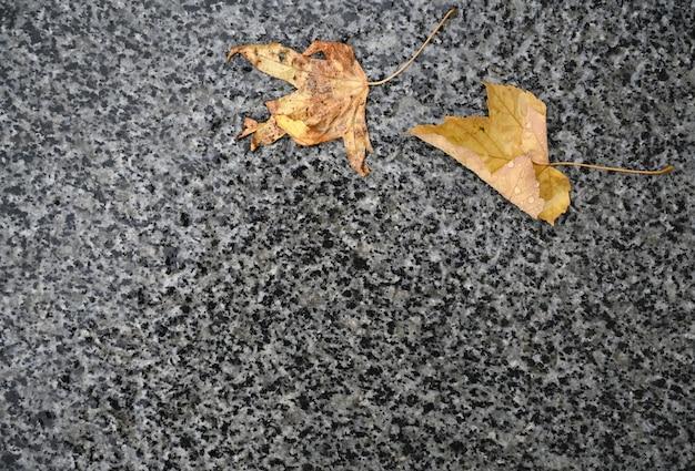 Опавшие осенние листья на земле после дождя
