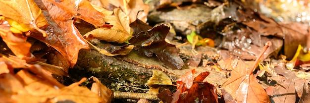 落ちた秋のカエデの葉は赤くて濡れています。バナー