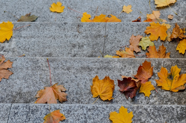 Fallen autumn yellow maple leaves on granite gray stairs