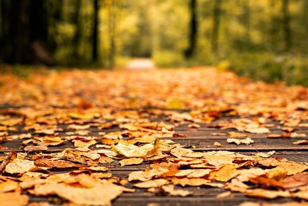 秋の森の小道に落ちた明るい黄色、赤、オレンジの葉