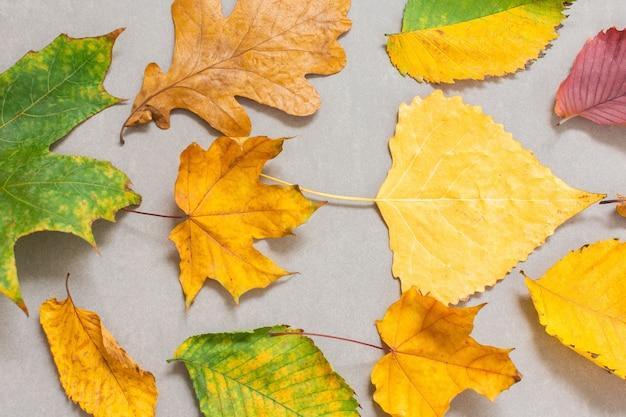 灰色の背景、秋の背景に落ちた色とりどりの木の葉