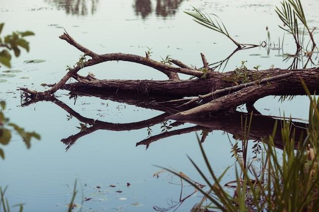 Fallen dead tree in the water