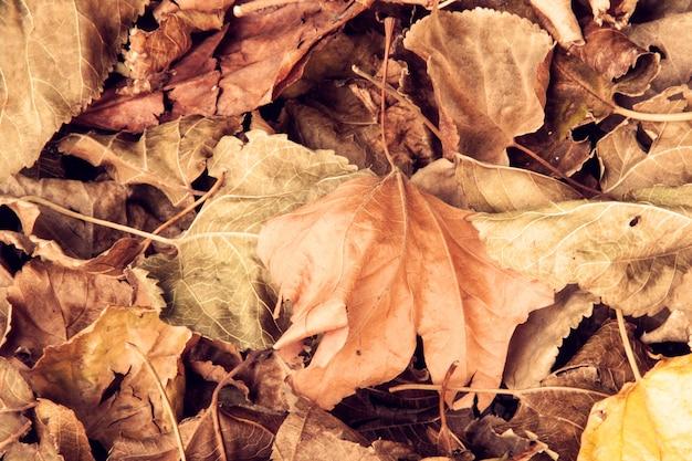 Опавшие сухие осенние листья