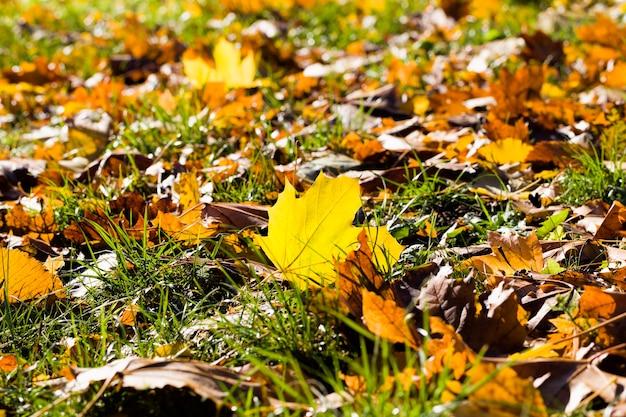Опавшие листья и лежат в кронах деревьев