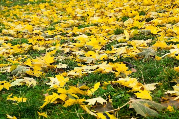Опавшие листья с деревьев осенью