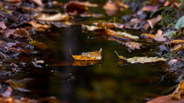 暗い水たまりの水に落ち葉、秋のモチーフ