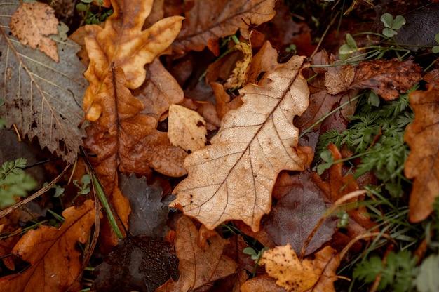 지상에 가을 낙엽.