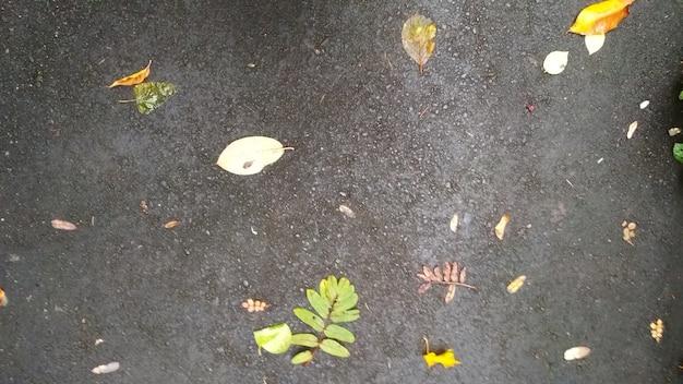 Fallen leaves lie on wet asphalt