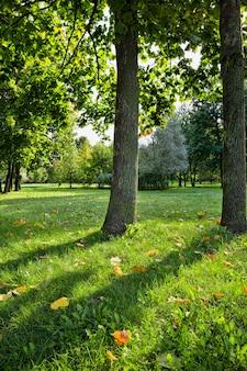 秋の草の上に横たわる落ち葉