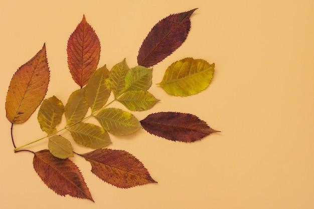 노란색 배경에 나무의 낙엽, 가을 개념, 평평한 평지, 위쪽 전망
