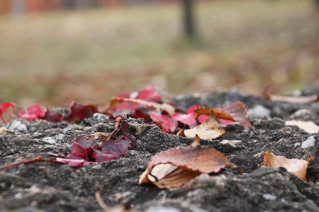 Опавшие листья на земле