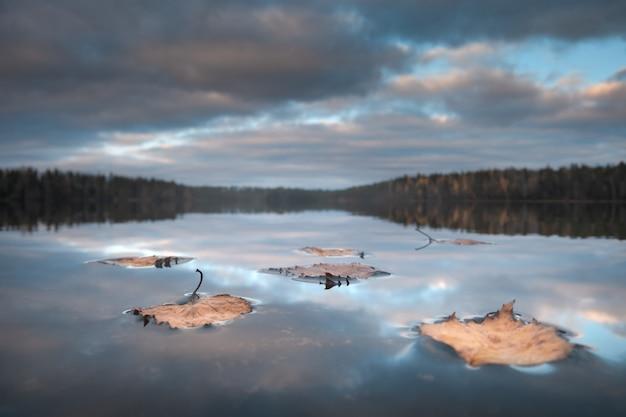 森の湖の水面に落ち葉。前景に焦点を合わせます。