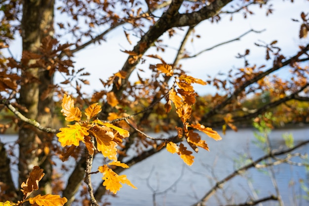 Fallen leaves tree with blurred lake