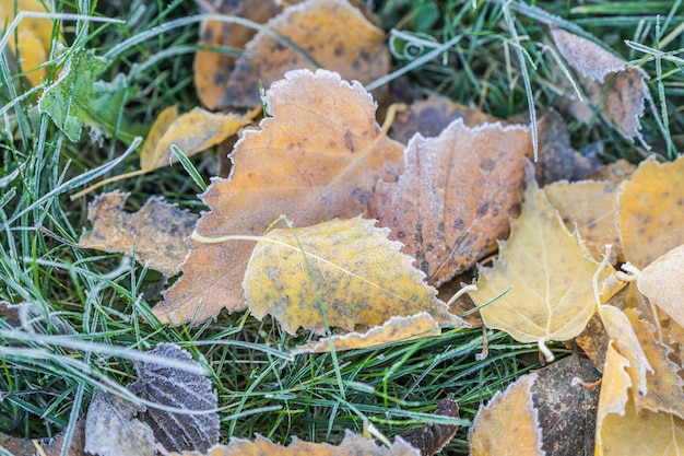 Fallen leaves with white frost, autumn concept