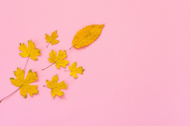 분홍색 배경에 떨어진 단풍나무 잎, 가을 개념, 평평한 평지, 위쪽 전망, 복사 공간