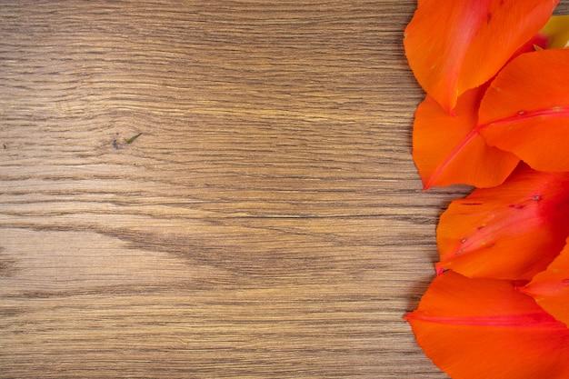 木製の背景に赤いチューリップの落ちた花びら