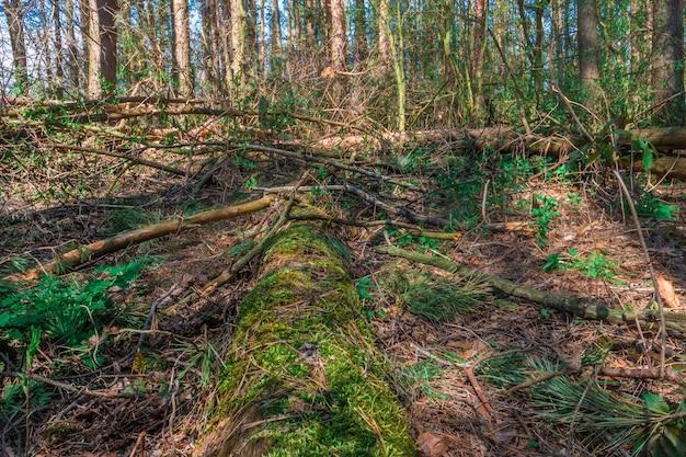 林床に倒れた松の木がゆっくりと腐敗し、生命の輪に戻る