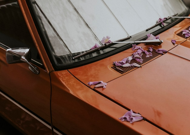Fallen pink blossoms on the hood of a vintage car