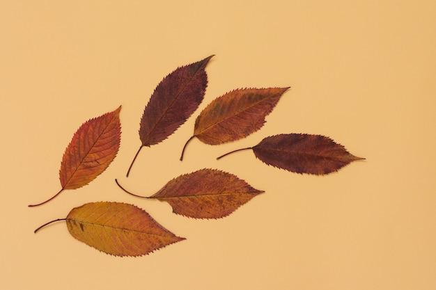 노란색 배경에 떨어진 달콤한 체리 잎, 가을 개념, 평평한 평지, 위쪽 전망