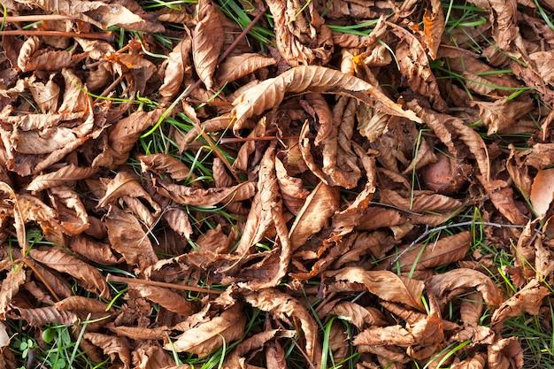 地面に倒れ、緑の草が栗のオレンジ色の葉を乾かします