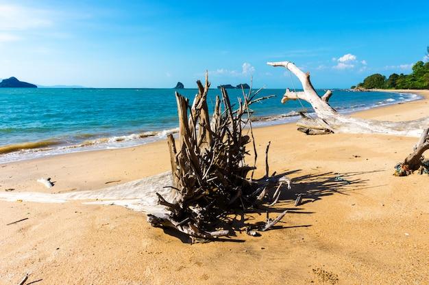 Fallen tree on beach in the summer