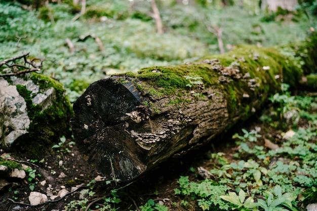 Ствол упавшего дерева, покрытый мхом, лежит на земле