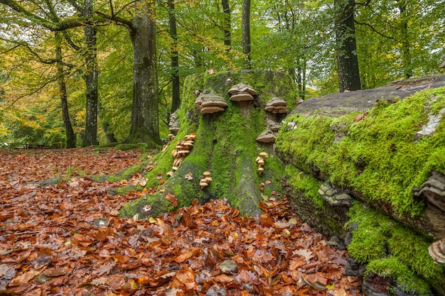 Fallen tree with mushroom formations growing on it in magical green forest