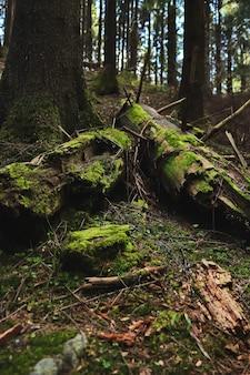 緑の苔で覆われた突き出た枝を持つ倒木
