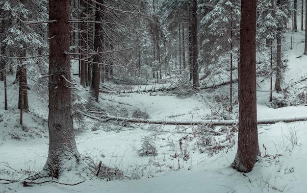 겨울 눈 덮인 숲에서 쓰러진 나무