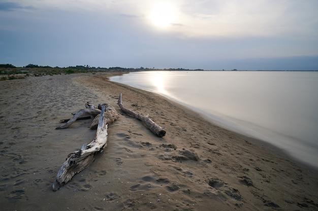 海岸に倒れた木、穏やかな静けさの概念