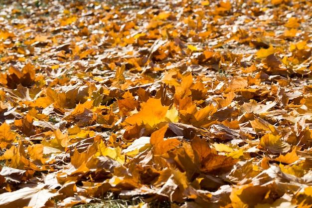 倒れた黄色の木の葉